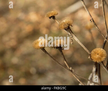 Beautiful dried meadow flowers in autumn season - Stock Photo