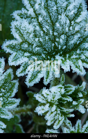 a frosty winter's morning near Milborne Wick, Somerset, England, UK - Stock Photo