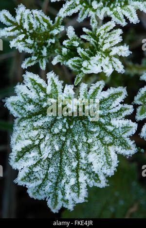 a frosty winter's morning near Milborne Wick, Somerset, England - Stock Photo