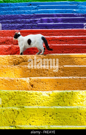 Cat standing on colourful painted steps, Karakoy region, Istanbul, Turkey - Stock Photo