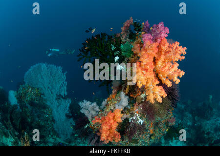 Colorful coral reef with soft and fan corals. - Stock Photo