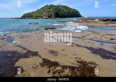 Landscape of Goat Island beach located in the East Coast of the North Island of New Zealand. - Stock Photo