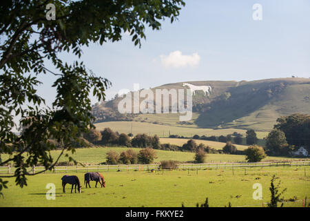 Huge chalk horse on hillside above Westbury,Somerset,England,U.K., - Stock Photo