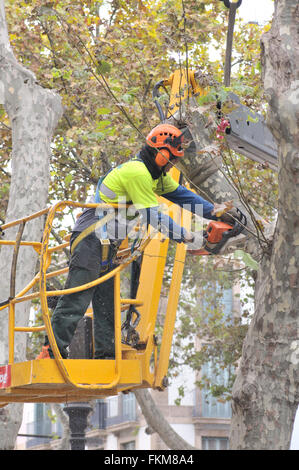 Worker man pruning a tree using a chainsaw. Barcelona, Catalonia, Spain - Stock Photo