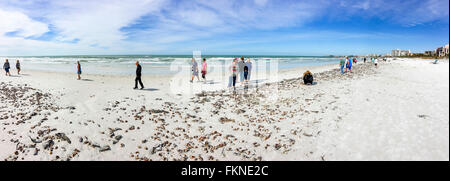 Panoramic view of Siesta Key beach in Sarasota Florida after a high tide and thousands of seashells lay on the beach - Stock Photo