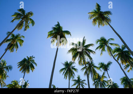 Soft image of coconut tree taken from low angle - Stock Photo