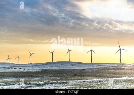 Wind turbines at sunset, Taiba, Ceara, Brazil - Stock Photo