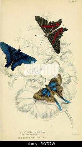 Foreign butterflies (Plate 25) - Stock Photo