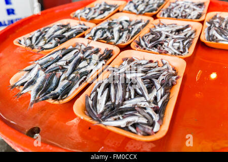Group of sardines on a colorful bench for sale in fresh seafood market. Fresh sea fishes in a Turkish fish market - Stock Photo