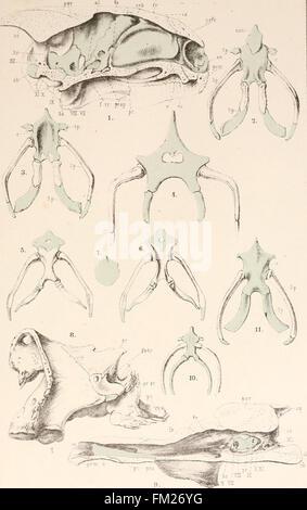 Dr. H.G. Bronn's Klassen und Ordnungen des Thier-Reichs - wissenschaftlich dargestellt in Wort und Bild (1890) - Stock Photo