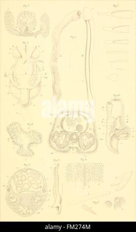 Dr. H. G. Bronn's Klassen und Ordnungen des Thier-Reichs - wissenschaftlich dargestellt in Wort und Bild (1892) - Stock Photo
