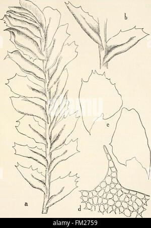 Dr. L. Rabenhorst's Kryptogamen-Flora von Deutschland, Oesterreich und der Schweiz (1906) - Stock Photo