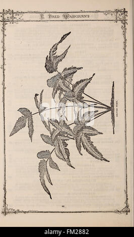 E. Fred Washburn's amateur cultivator's guide to the flower and kitchen garden for 1880 (1880) - Stock Photo