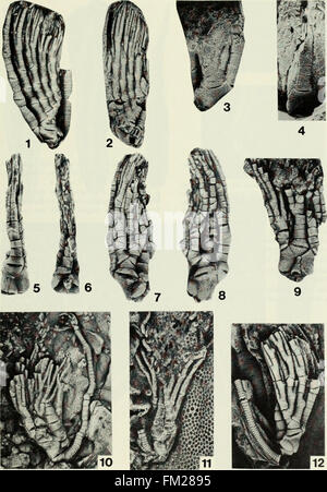 Early Llandovery crinoids and stelleroids from the Cataract Group (Lower Silurian) in southern Ontario, Canada (1984) - Stock Photo