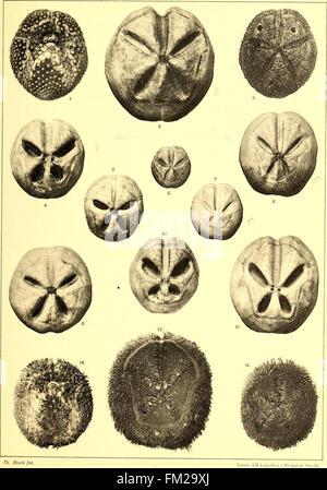Echinoidea of the Swedish South Polar Expedition (1910) - Stock Photo
