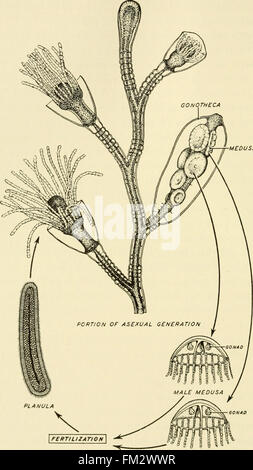 Elements of biology, with special reference to their rC3B4le in the lives of animals (1933) - Stock Photo