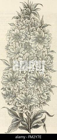Ellwanger and Barry's descriptive catalogue of hardy ornamental trees and shrubs, roses, etc., etc., etc (1868) - Stock Photo