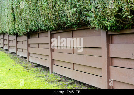 Backyard brown wooden fence and green western red cedar hedge - Stock Photo