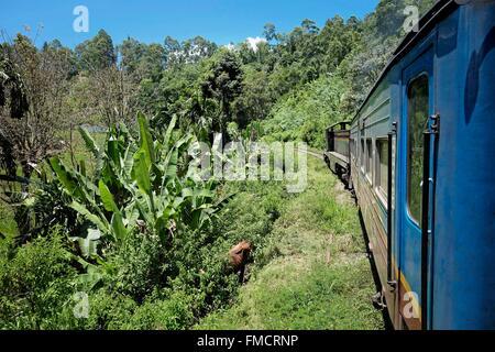 Sri Lanka, train Ella-Colombo, overlooking the landscape and vegetation - Stock Photo