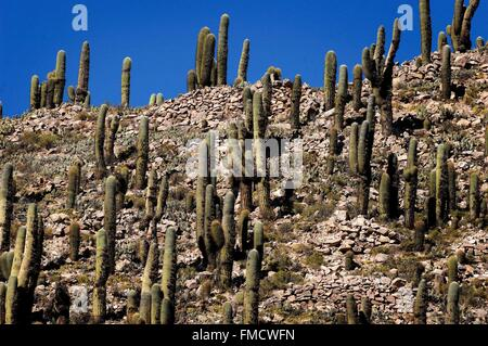 Argentina, Jujuy province, the colorful valley of Quebrada de Humahuaca, a long valley east of the central Andean - Stock Photo