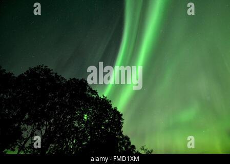 Norway, Nordland, Lofoten islands, Vestvagoy island, northern lights (aurora borealis) - Stock Photo