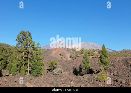 Lava with view of the volcanoes Teide and Pico Viejo, Teide National Park, Tenerife, Canary Islands, Spain - Stock Photo