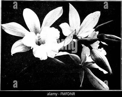 The orchid stud-book- an enumeration of hybrid orchids of artificial origin, with their parents, raisers, date of - Stock Photo