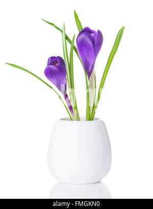 purple crocuses in a white vase - Stock Photo