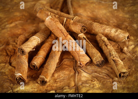 Closeup of some rolled dry tobacco leaves - Stock Photo