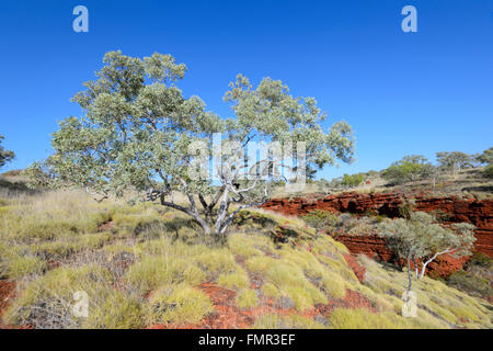Karijini National Park, Pilbara, Western Australia, WA, Australia - Stock Photo
