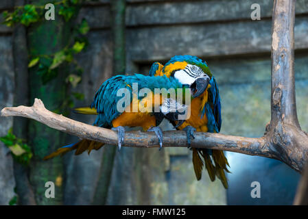 beautiful bright colors parrot on a branch close-up - Stock Photo