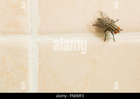 Closeup of housefly on yellow tile floor with copy space - Stock Photo