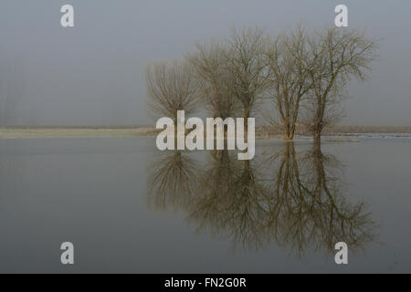 Flooded farmland with solitary trees on a typical ice cold misty winter morning at Lower Rhine Region, Germany. - Stock Photo