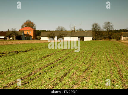 Polish countryside in march,early spring,green field of winter wheat,corn and farm buildings in the background.Interesting - Stock Photo
