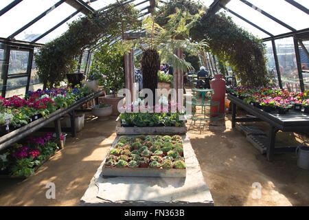 Petersham Nurseries bohemian jumble of greenhouses and gardens of Petersham House, Richmond Upon Thames, Surrey, - Stock Photo