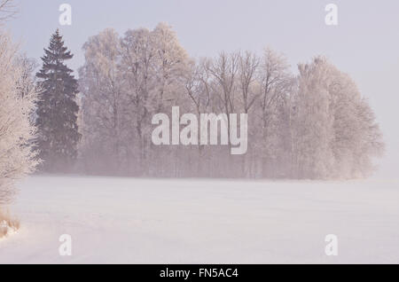 beautiful winter early morning  landscape  with hoarfrost and mist - Stock Photo