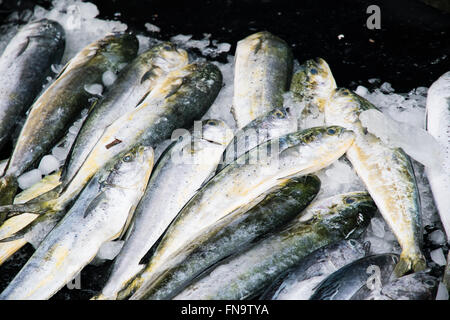 Fish Sold at Suao Harbour in Yilan, Taiwan - Stock Photo
