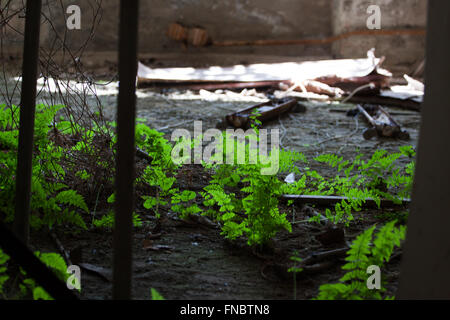 Nature takes over Chernobyl years after nuclear disaster - Stock Photo