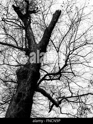 old tree in black and white against foggy sky - Stock Photo
