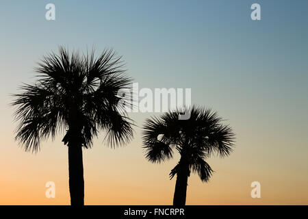 A silhouette of two palm trees taken on the beach at sunset. - Stock Photo
