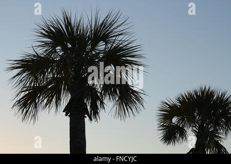 A silhouette of two palm trees taken near sunset on the beach. - Stock Photo