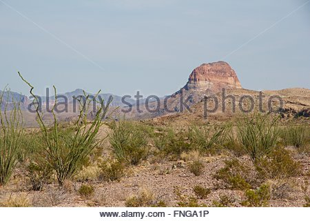 Desert vegetation and Rocky Landscape in Big Bend National Park - Stock Photo