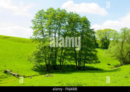 Deutschland, Rhein-Sieg-Kreis, Lohmar, zwischen Kreuznaaf und Hausen,  an der Agger - Stock Photo