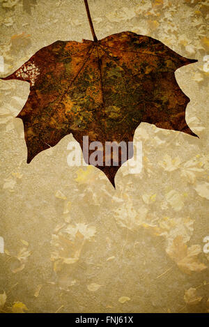 Dried Autumn Maple Leaf on Grunge Background with copy space - Stock Photo