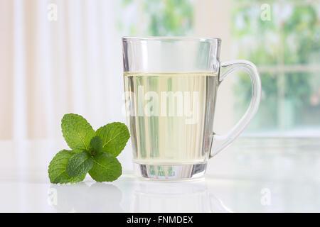 Herbal tea. Mint - Stock Photo