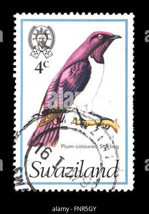 Postage stamp from Swaziland depicting a violet-backed starling (Cinnyricinclus leucogaster), - Stock Photo