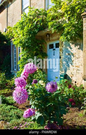Decorative pink dahlias in small front garden of village cottage in Biddestone Wiltshire UK - Stock Photo