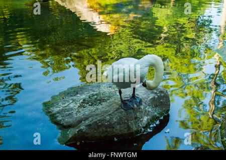 White Swan on stone at pond - Stock Photo