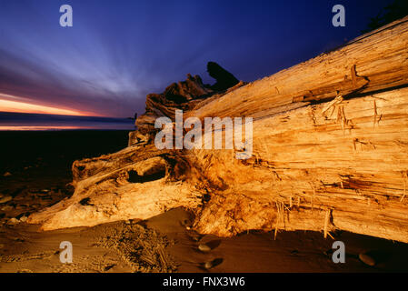Fallen Tree Trunk Lit up at Night on the Beach, Olympic National Park, Washington, U.S.A. - Stock Photo