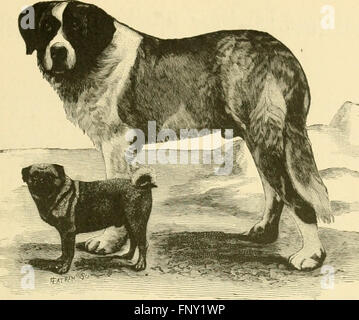 The American book of the dog. The origin, development, special characteristics, utility, breeding, training, points - Stock Photo